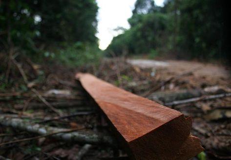 Estudo-Idesam-florestal-potencial-arrecadar_ACRIMA20131008_0006_15