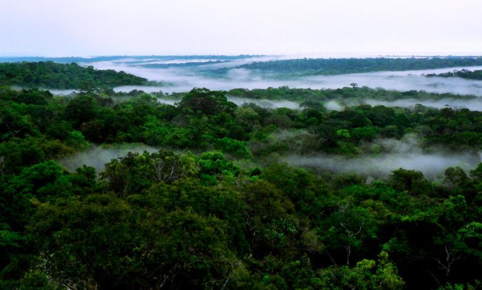 Floresta e Clima