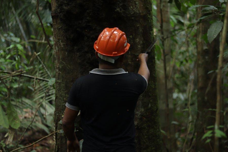 (Português do Brasil) O Idesam apoia produtores de Copaíba nos lugares mais remotos, como no PAE Aripuanã-Guariba (Apuí), um assentamento com cinco comunidades que escoam sua produção de óleo com a ajuda logística do instituto, que também promove cursos de boas práticas sustentáveis de extração e oficinas de gestão de negócios, financiado pelo edital Floresta em Pé/FAS.